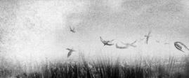 """Summer 2014"", dir. Wojciech Sobczyk"