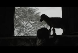 7 SHEEP | dir. Wiktoria Szymańska