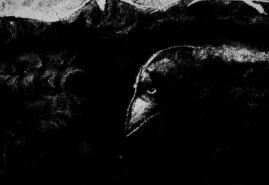 TRACES OF EPHEMERAL | dir. Agnieszka Waszczeniuk